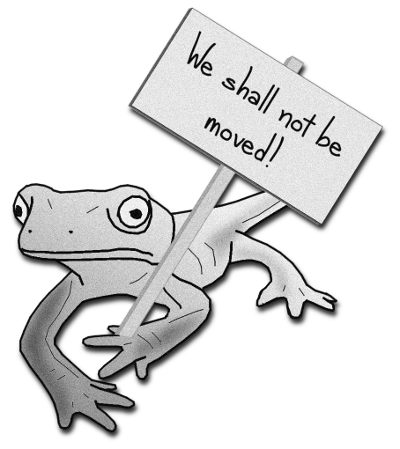 This newt will not be moved